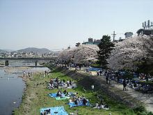 Kamogawa_hanami[1]