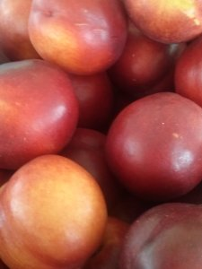 tree to produce stand nectarines