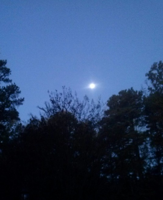 morning moon2