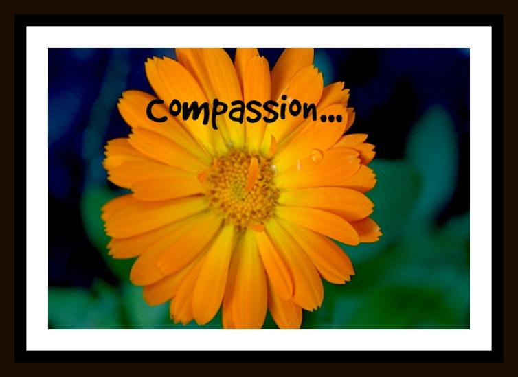 calendulacompassion