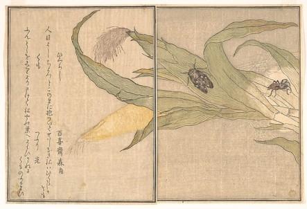 Kitagawa Utamaro | Evening Cicada 1615