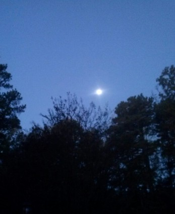 morning moon1